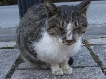 長瀞の猫・2