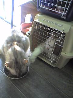 「俺はもう食べ終わったのでおまえのをよこせ」