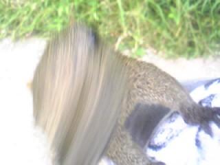 餌を奪い取るリス(※イメージ※)