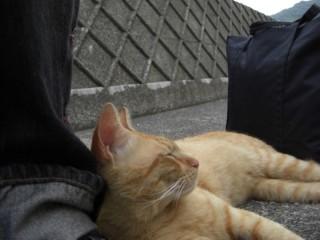 足枕位置直し猫