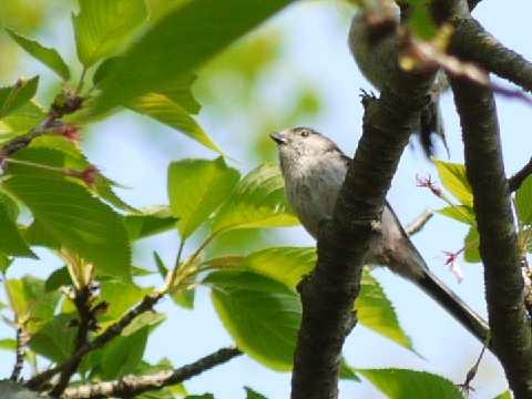 謎の鳥(トリミング)